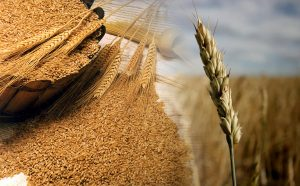 Beneficios y propiedades del Salvado de trigo
