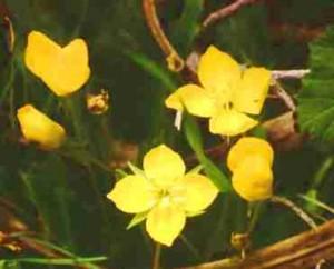 Aceite de onagra, beneficios en la piel - Yotuspanishoil.com
