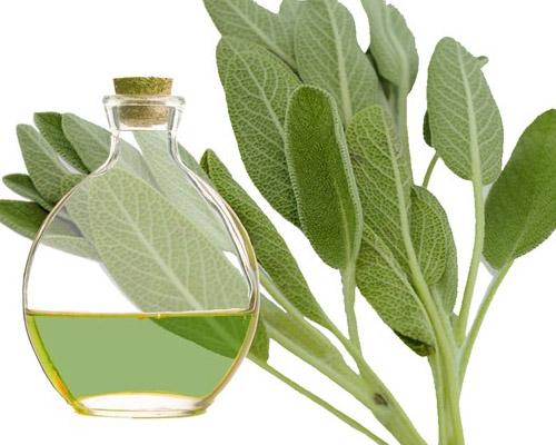 Propiedades beneficiosas para la salud de la Salvia