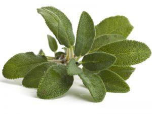 Aceite de Salvia es buena para la salud
