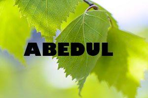 Abedul - Planta MEdicinal - Yotuspanishoil.com
