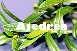 Ajedrea Planta saludable - Yotuspanishoil.com