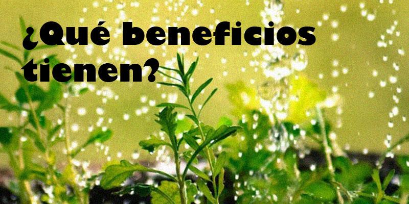 beneficios plantas medicinales - Yotuspanishoil.com