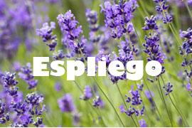 espliego planta saludable y medicinal - Yotuspanishoil.com