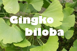 Gingko Biloba saludable - Yotuspanishoil.com