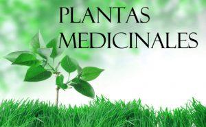 Plantas medicinales saludables - Yotuspanishoil.com