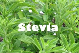 stevia planta saludable y buena - Yotuspanishoil.com